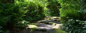 lush green trails