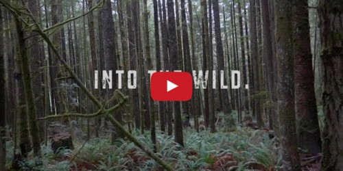 Into the Wild video created by Alex Anthony